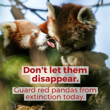 Give Monthly   Red Panda Network